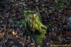 Alneskogen