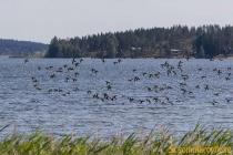 Idbyfjärdens naturreservat 2019